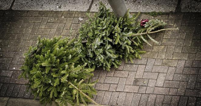 Weihnachtsbäume auf der Straße
